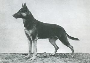 1930sGSD